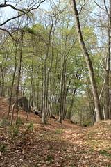 Woods at Wildwood (sandy richard) Tags: usa newyork unitedstates geology wildwood calverton wildwoodstatepark newyorkstateparks sandyrichard longislandgeology sandrarichard