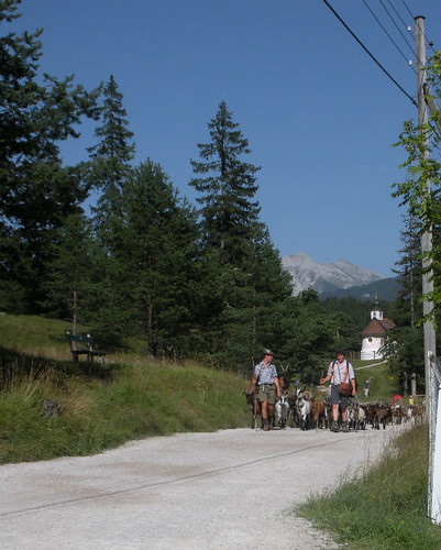 Goatherders leading the way home Mittenwald Germany
