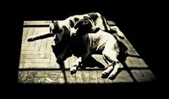 Dogs (Dany Ali Ochoa Sanchez) Tags: light dogs perros cachorros mascotas babydogs