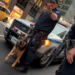 "NYC on edge  "" no pictures! "" (NYCandre) Tags: nyc newyorkcity dog freedom politics attack police nypd security trouble guns 5bestdogs perversion economy ar15 k9 barking feds germansheperd oligarchy firstamendment ows washingtonweek dsc5972 banksters occupywallstreet kleptomancy globalmess mtsub subcrtq"