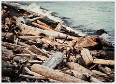 Driftwood (Free 2 Be) Tags: wood beach waterfront driftwood seashore campbellriver afsdxvrzoomnikkor18200mmf3556gifedii