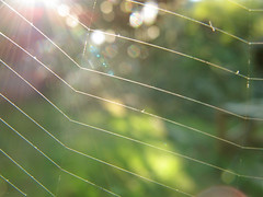 Backlighted Web (Batikart ... handicapped ... sorry for no comments) Tags: autumn light red orange sun black detail macro green rot fall nature sunshine yellow closeup backlight rural canon germany geotagged deutschland focus europa europe dof bokeh web details herbst natur spiderweb tranquility september beam cobweb gelb grn makro spidersweb sonne schwarz beams sonnenstrahlen sunbeams spinnennetz gegenlicht sunsrays g11 fellbach swabian 2011 100faves 50faves hbw viewonblack batikart canonpowershotg11 gettygermanyq4