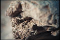 Legnetto (Daddi Andrea) Tags: wood light shadow sea italy mer macro bird beach nature sand mare details feather playa natura tuscany ambient environment dettagli toscana plage spiaggia sabbia ambiente 550d legnetto mirigliano ilobsterit