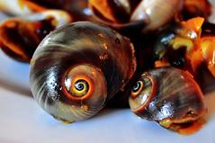 The Eyes Contact (Araleya) Tags: food nikon asia southeastasia shell vietnam nikkor vietnamesefood hochiminh abtract localfood araleya d5000
