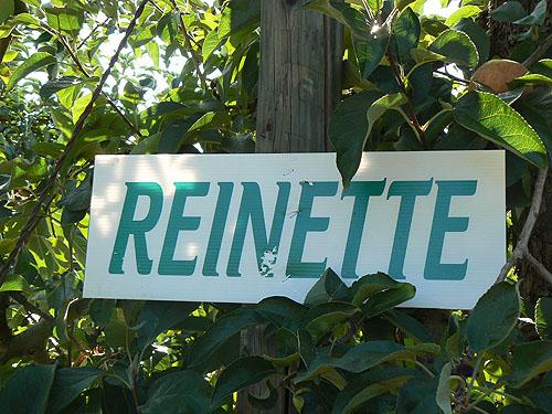 reinettes.jpg