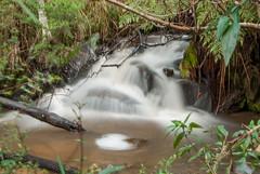 Olinda Falls (Upper) (Scottmh) Tags: water waterfall bush slow smooth australian australia falls cascade silky olinda