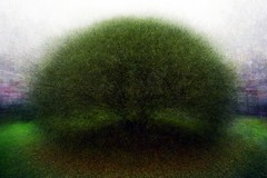 Willow (MikeAncient) Tags: autumn blur tree art fall yard impressionism puu piha syksy crackwillow salixfragilis terijoensalava