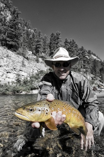 Fall Brown Trout 1