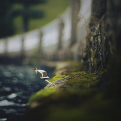 no more (fiddle oak) Tags: portrait lake green feet water stone wall swimming garden miniature jump jumping pond bobo barefoot swimmer jumper zev littlefolk fiddleoak