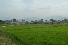 Rice fields outside Shilong