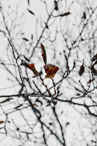 2011-10-10 17-36-05.jpg