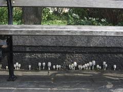 cheerful mushrooms line up under bench