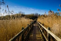 The walk from Studland Beach (andy_s_550) Tags: uk greatbritain sunset sea seascape reeds landscape coast landscapes seaside dorset nationaltrust purbeck studland winterlandscape uklandscape leicam9 dorsetseascape