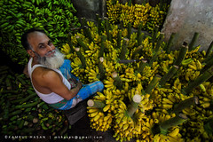 Happy Seller (Kamrul - Hasan) Tags: people man green yellow living banana business bangladesh seller salesman profession ripen