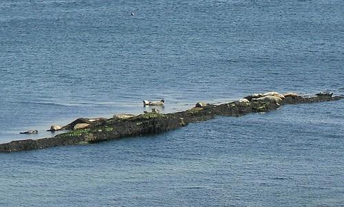 Seals 1
