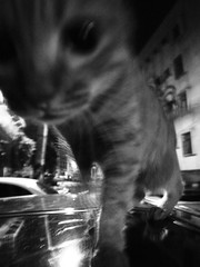 () Tags: street bw white black night cat photography friend snap     grd3
