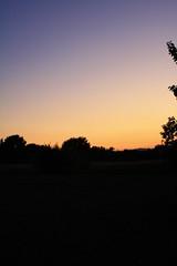 I'm still alive! (Irene Bonacchi) Tags: sunset plants colors backyard tramonto colori prato 2890mm sooc imstillalive canoneos1000d