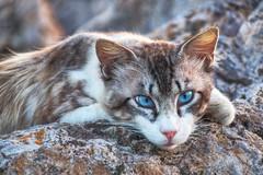 Gatto (socrates197577) Tags: sardegna nikon porto gatto gatti hdr oristano photomatix colorphotoaward doublyniceshot artistoftheyearlevel3 infinitexposure