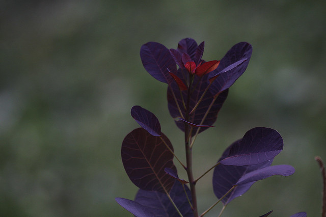 colourful plant leaves2