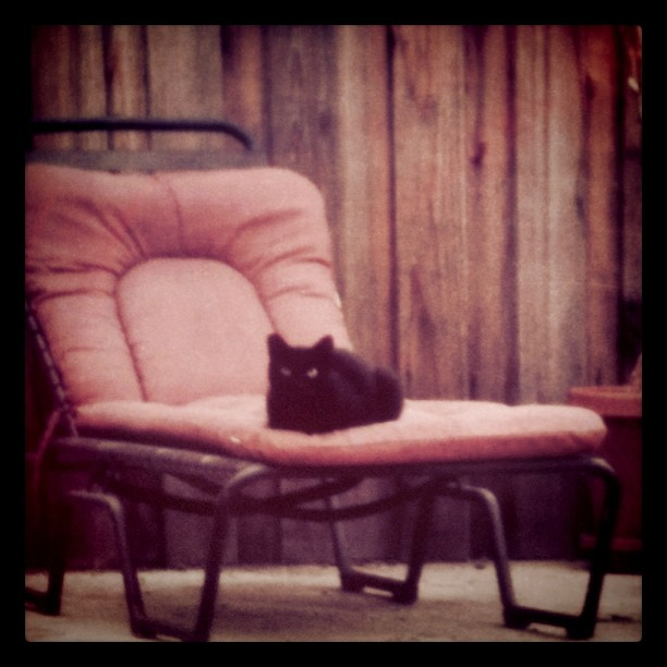 Achilles... waiting for his dinner. #cat #blackcat