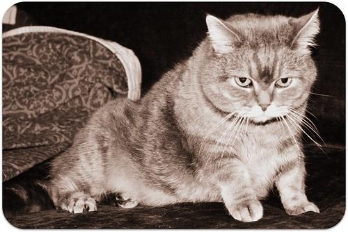 Kashim - Weekend Cat Blogging #324