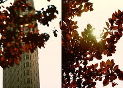 (A looking glass heart.) Tags: light red sunlight building leaves sunshine buildings gradient processed flatironbuilding flatiron