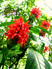 Beautiful flora of Palawan (Joanna Jane Liwag) Tags: puertoprincesa palawan butterflygarden crocodilefarm bakershill plazacuartel mitrasranch palawanwildliferescueandconservationcenter palawancitytour