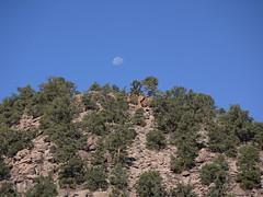 pinyon moon