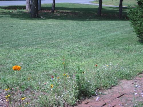 lawn mowed... check!