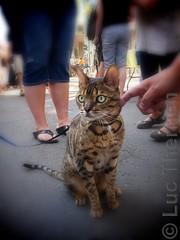 Le chat du marche (ManticorePhoto) Tags: ca 3 canada apple canon aperture edmonton ab alberta software nik luc g11 manticore therrien niksoftware 66669 manticore66669