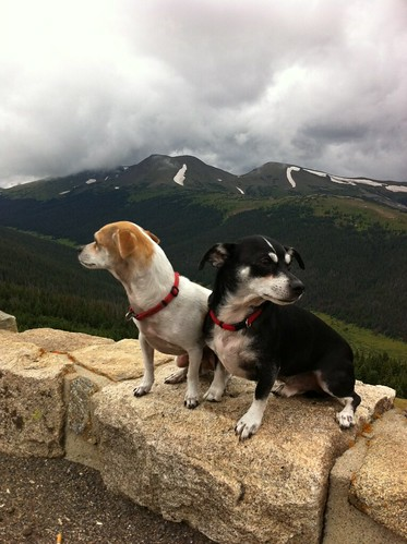 Puppies Mount The Rockies! (2)