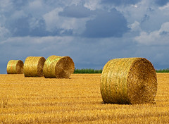 Golden August (RainerSchuetz) Tags: field clouds harvest stubblefield wow1 wow2 wow3 baleofstraw blinkagain bestofblinkwinners blinkagainsuperstars blinksuperstar blinksuperstars