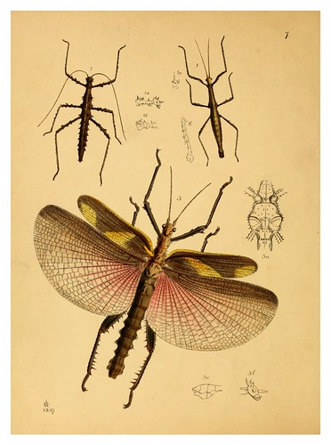 002-The cabinet of oriental entomology…1848- John Obadiah Westwood