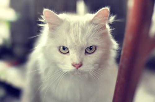 [フリー画像] 動物, 哺乳類, 猫・ネコ, 201109050500