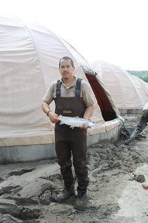 USFWS technician with Atlantic salmon