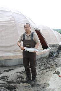 USFWS technician with Atlantic salmon