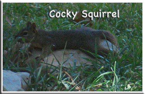 Cocky-Squirrel