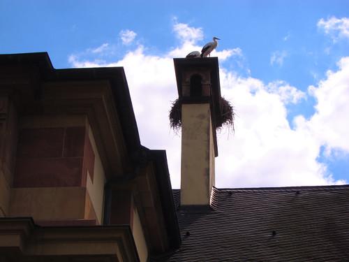 Strasbourg Stork by Danalynn C