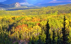 Autumn in Denali - Alaska landscape (blmiers2) Tags: travel blue autumn orange mountain mountains green fall nature colors yellow alaska landscape nikon autumncolors denali autumnal trres d3100 blm18 blmiers2