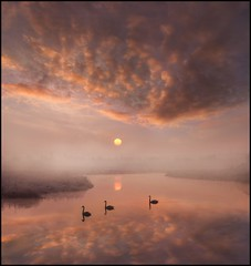 A Beautiful Morning (adrians_art) Tags: sky cloud mist water birds fog reflections swans rivers