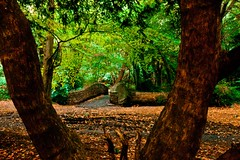 Woodland bridge (Steve-h) Tags: birthday park bridge autumn trees ireland dublin orange brown green nature wet leaves rain stone canon woodland lens dead colours tripod rich wideangle former framing showers novelist 60thbirthday manfrotto crokepark westlife bushypark wideanglelens bertieahern 2011 brassneck taoiseach steveh sundayindependent nickybyrne manfrottotripod ceceliaahern iso2000 canonef1635mmf28liiusm canoneos5dmk2 goerginaahern