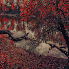 breaking the rules (ildikoneer) Tags: autumn trees color reflection broken canon river season eos hungary sigma ps software 1020mm danube cs5 40d fleursetpaysages lelitedespaysages