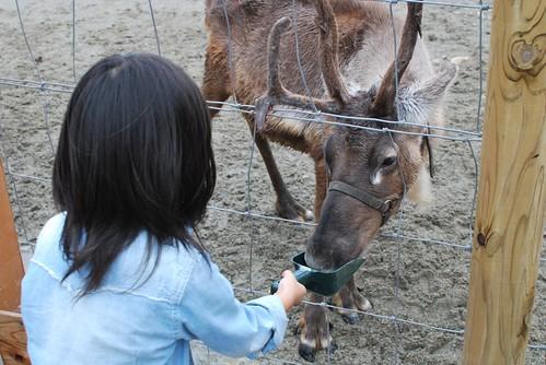 feed a reindeer