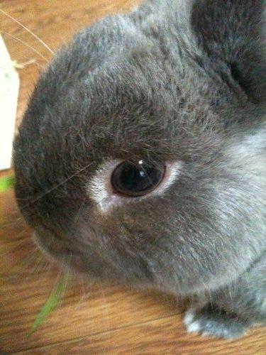 うさぎ専門店『CuteRabbit』@田原本町-23