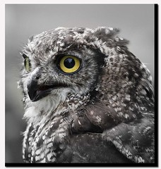 Mr Owl ... (A.J.Pendleton-Lightbox 2008) Tags: bird nature up closeup canon close owl birdsofprey canon40d naturethroughthelens 400lens blinkagain bestofblinkwinner bestofblinkwinners
