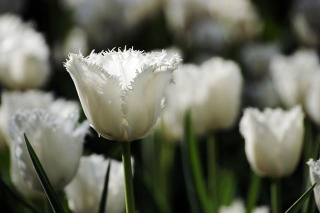 110417_151939_横浜_花と緑のスプリングフェア2011