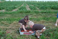 DSC_0052 (macyaugustus) Tags: strawberry jake louisville patch zack picking pickin pickn