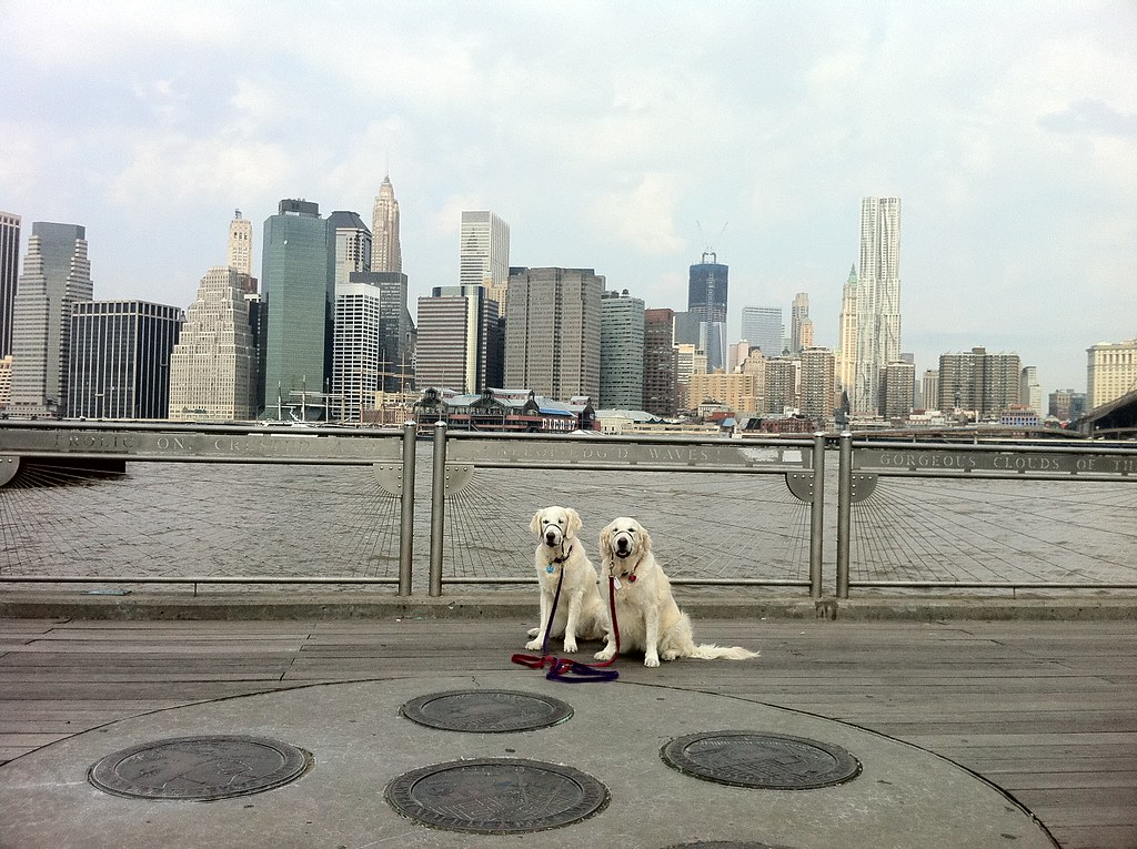 Fulton Ferry Landing Dogs 15 Sep 2011