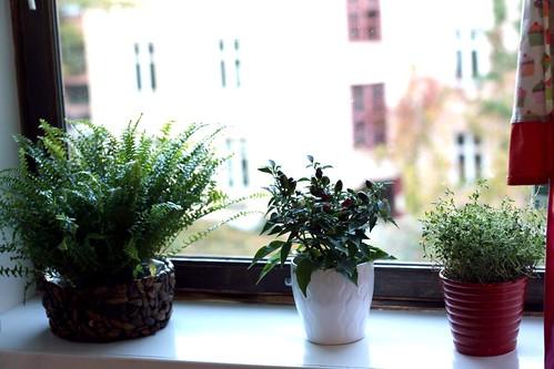 Kjøkkenplanter