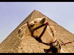 EGYPT (BoazImages) Tags: sphinx desert northafrica egypt middleeast culture cairo camel egyptian pyramids egipto giza ägypten touristattraction egitto egito مصر egipt 埃及 traveldestinations エジプト greatpyramids 이집트 الجيزة египет legypte boazimages أبوالهول αίγυπτοσ อียิปต์ मिस्र جيزةيسروبوليس מצרים